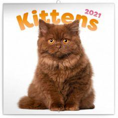 Kalendář 2021 poznámkový: Koťata, 30 × 30 cm