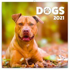 Kalendář 2021 poznámkový: Psi, 30 × 30 cm