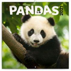 Kalendář 2021 poznámkový: Pandy, 30 × 30 cm