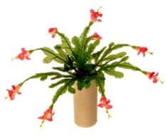 EverGreen Karácsonyi kaktusz pr. 35