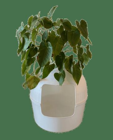 RHR Quality Macska kisállat toalett Flower XXL White