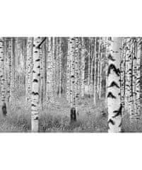 KOMAR Products vliesová fototapeta XXL4-023 Woods, rozměry 368 x 248 cm