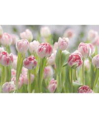 KOMAR Products papírová fototapeta 8-708 Secret Garden, rozměry 368 x 254 cm
