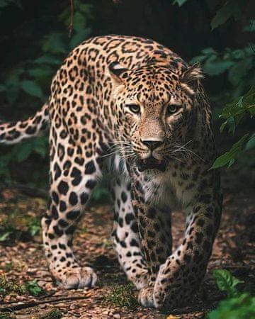 Jerry Fabrics Leopard Green