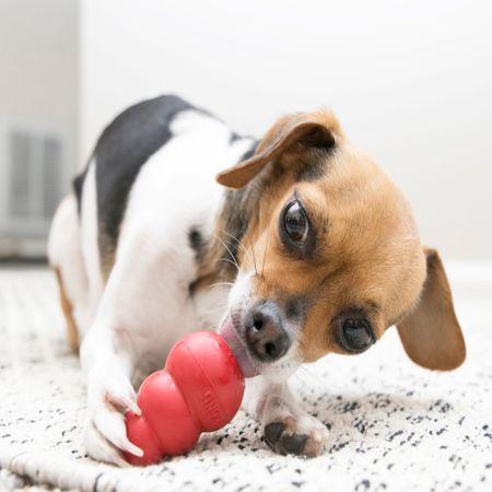 KONG Classic igračka za pse, XL, crvena