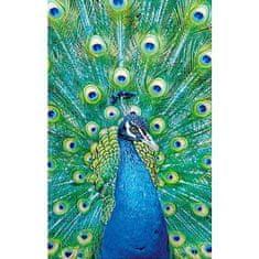 Clementoni Puzzle 1000 Peacock Blue