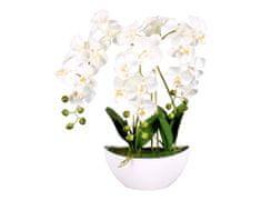 Ceramicus Orchidej v květníku 60 cm, 3 výhony, 21 květů bílá
