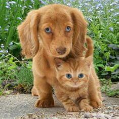 mapcards.net 3D magnetka Pes a mačka