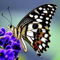 mapcards.net 3D magnetka Motýľ na kvete