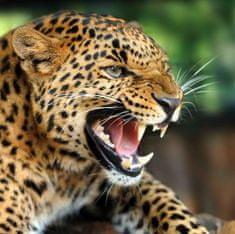 mapcards.net 3D magnetka Leopard
