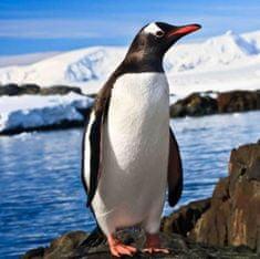 mapcards.net 3D magnetka Penguin