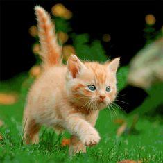 mapcards.net 3D veľký štvorec - Kitten (Mačiatko)