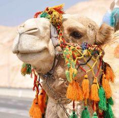 mapcards.net 3D magnetka Camel