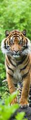 mapcards.net 3D záložka Bengal Tiger
