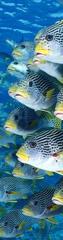 mapcards.net 3D záložka Ryby