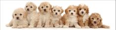 mapcards.net 3D záložka Seven puppies