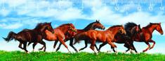 mapcards.net 3D pravítko Horses DEEP