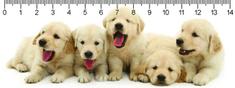 mapcards.net 3D pravítko Retriever puppies DEEP