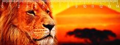 mapcards.net 3D pravítko Lion DEEP