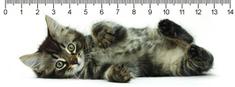 mapcards.net 3D pravítko Tabby kitty DEEP