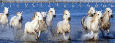 mapcards.net 3D pravítko Camarque horses DEEP