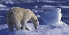 mapcards.net 3D panoráma Ľadový medveď