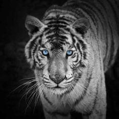 mapcards.net 3D štvorec White Tiger (Biely tiger)