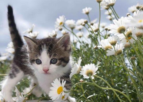 mapcards.net 3D pohľadnica Flower kitten (Miláčikovia - mačky)