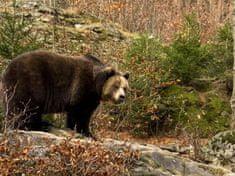 Adrop.sk Pozorovanie medveďov v Tatrách Tatry