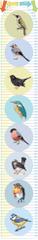 GEKONKY Samolepící nástěnný dětský metr: Naši ptáci