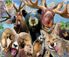 Gaira® Malovanie podľa čísiel Zvieratká M992445