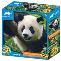 National Geographic 3D sestavljanka panda, 100 kosov, 31 x 23 cm