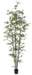 Shishi Bambuszzöld virágcseréppel 2,4 m