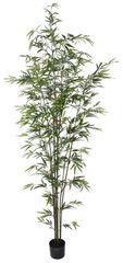 Shishi Bambuszzöld virágcseréppel 2,2 m
